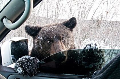 Медвежьи углы региональной политики президента